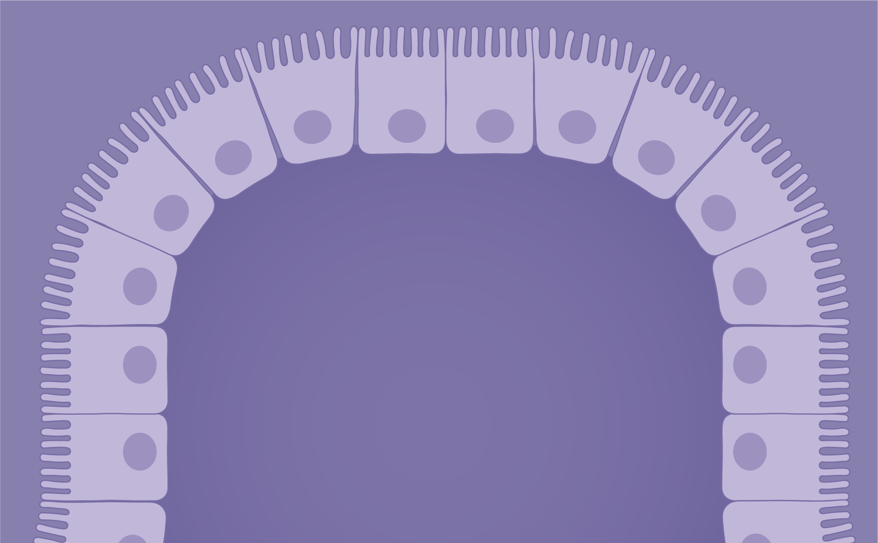 Epithelium icon category