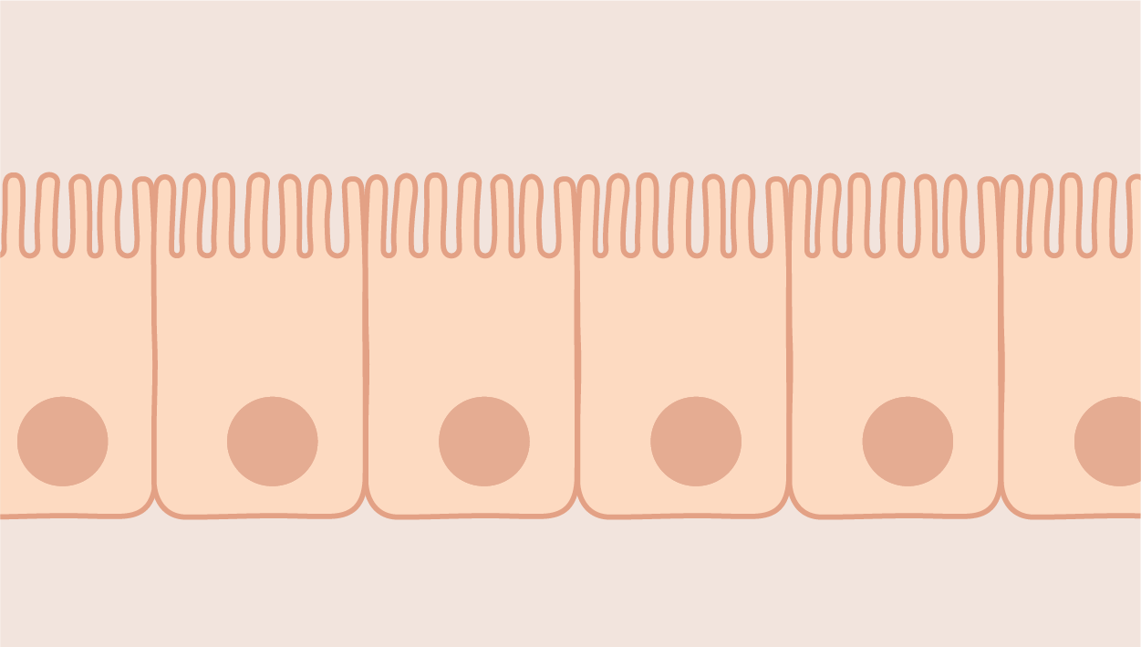 Epithelial Cells icon category