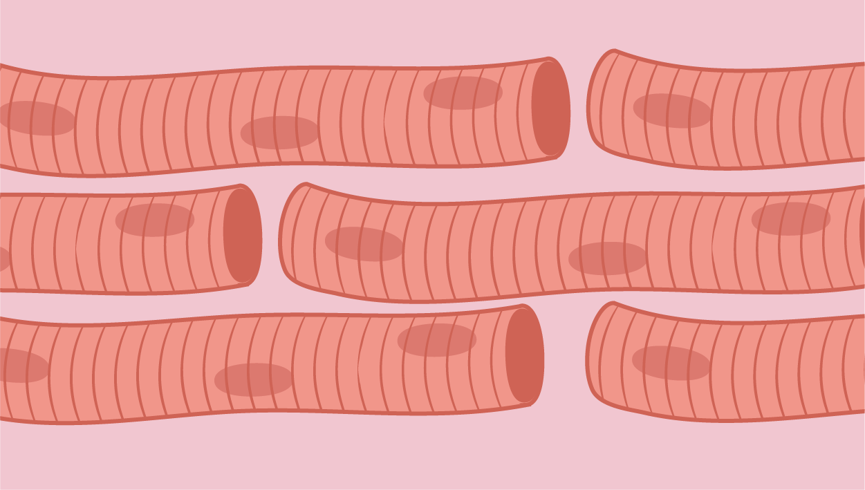 Muscle Cells icon category