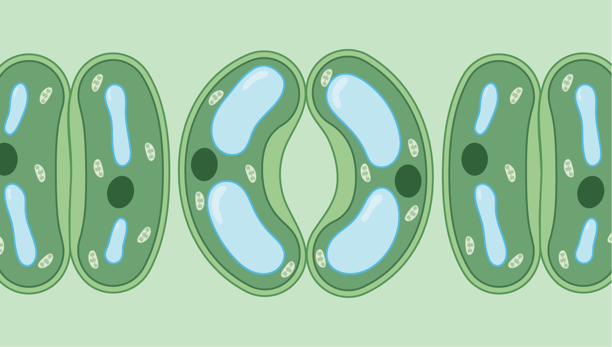 Plant Cells icon category