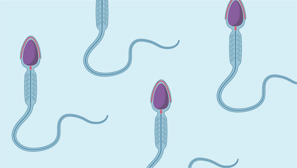 Reproductive Cells icon category